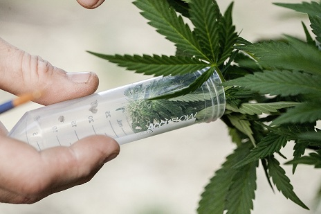 cbd and autism-marijuana clinical trial
