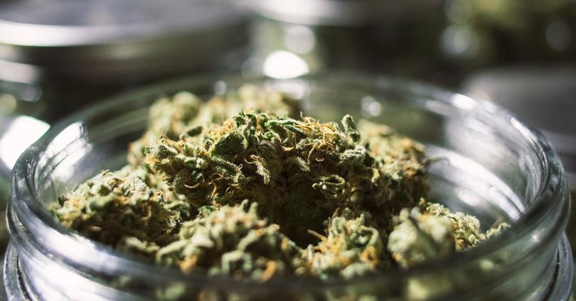 medical marijuana nugs