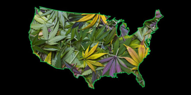cannabis map- patent 6630507