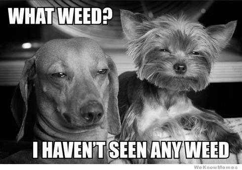 What Weed?- Stoner Meme