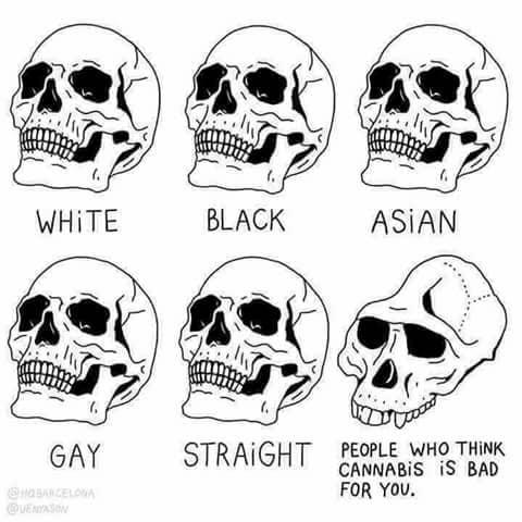 Skull of People Against Cannabis