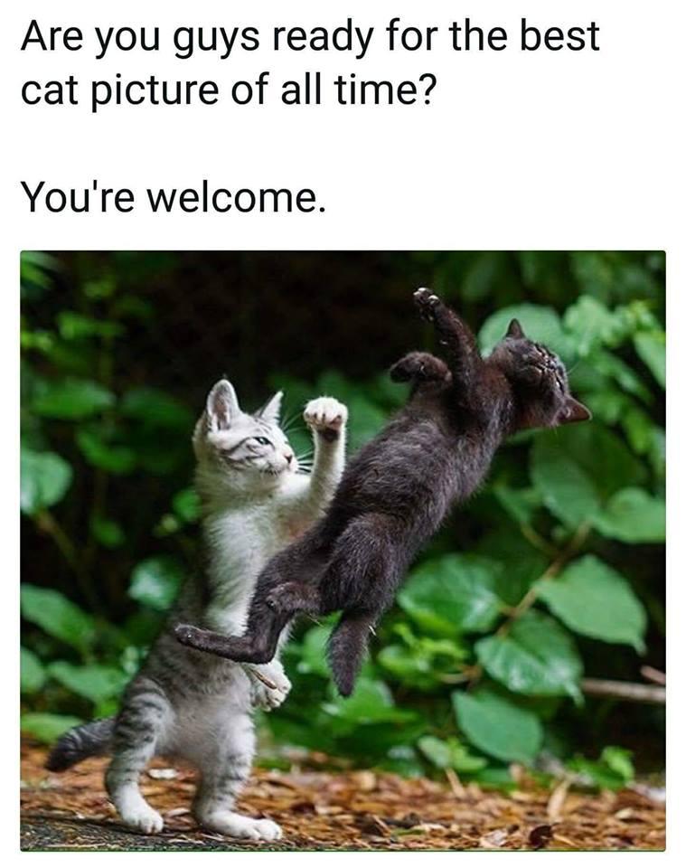 The Coolest Cat Pic- Meme
