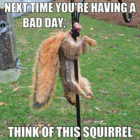 Having A Bad Day- Meme