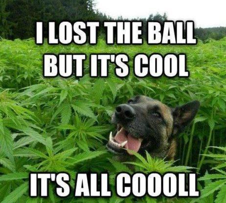 It's All Cool!-Stoner Meme