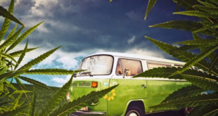 a green VW combi- What to Know about Marijuana Delivery and How to Make it Work for You.