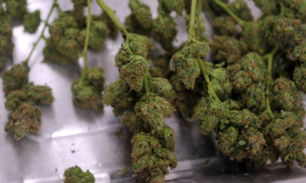 Check the online reviews-marijuana buds-7 Little Tricks To Achieve The Best Results In Buy Weed Online