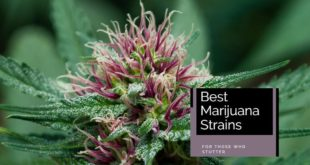 marijuana strains for those who stutter - Featured Image