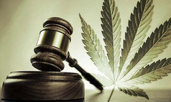 Cannabis Court