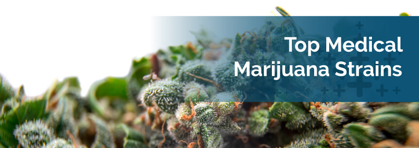 Marijuana Strains: Learn How to Choose the Best Strain for You