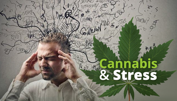 cannabis helps with stress