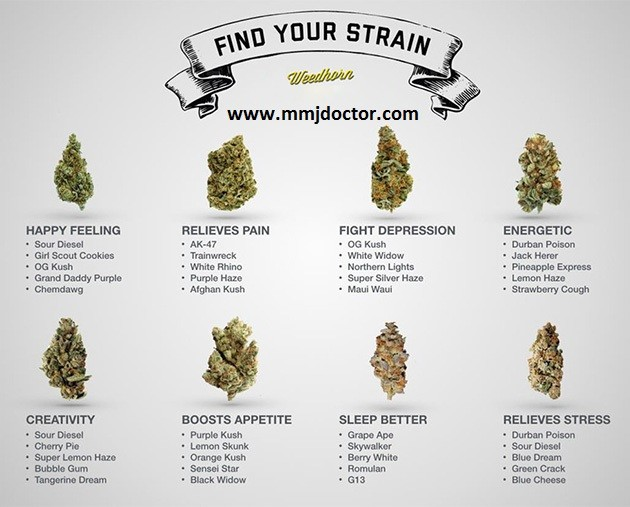 top medical and recreational marijuana strains