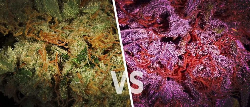 whats difference between kush and chronic