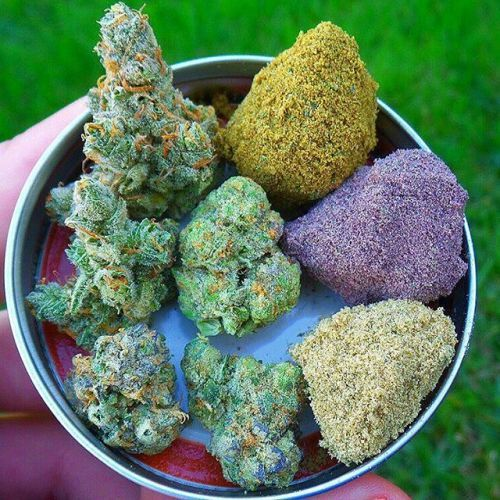 How Strong Is Moon Rocks Weed? | Potent |Moon Rock Weed