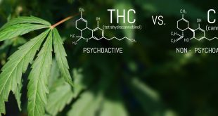 CBD THC Chemical Structural Formula, Cannabis Industry, Growing Hemp, Pharmacy Business, CBD Elements and THC in Marijuana and Medical Health.