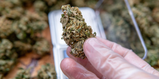 10 most popular cannabis strains